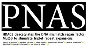 GNC Researchers publish Huntington's research in PNAS
